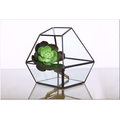 Форма Super Large Glass Terrarium Geometric