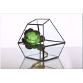 Shape Super Large Glass Terrarium Geometric