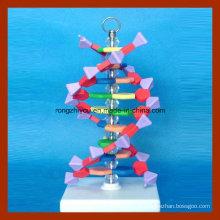 Petit modèle d'ADN de double hélice pour l'enseignement scolaire