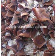 High quanlity Dried Auricularia Polytricha Mushrooms