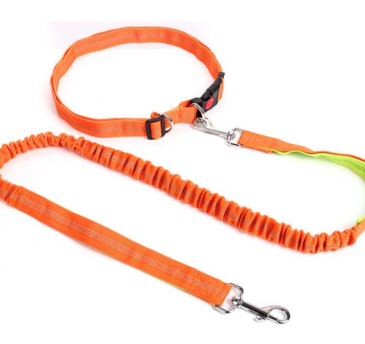 Large Dog Running Leash