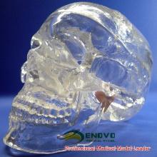 SKULL09 (12335) Crâne humain transparent de la taille de la vie de la science médicale classique, modèle anatomique de crâne