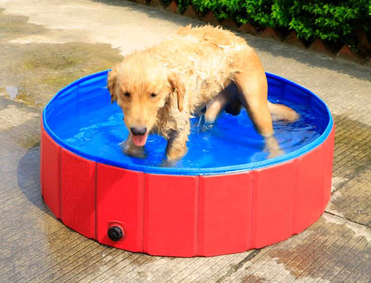 Pet Bath Tub & Pool products.We can customize the Pet Bath Tub & Dog Pool totally according to your requirements