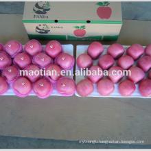 Fuji Apple Factory China