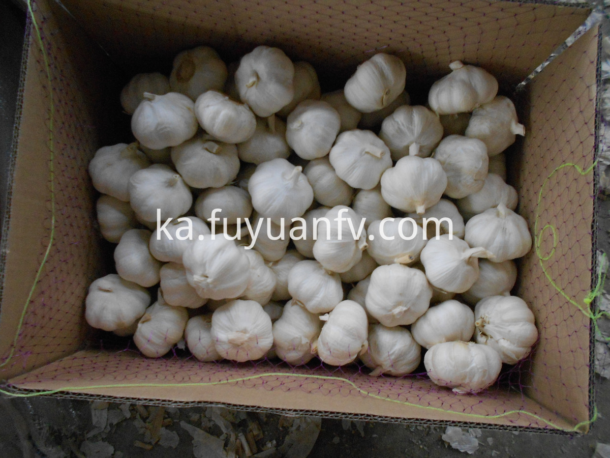 pure white garlic loose carton