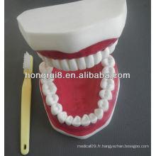 Modèle de soins dentaires médicaux de style nouveau, modèle de dents