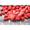 High quality goji berry fruit plant for sale