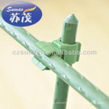planta stent / planta trepando alambre, planta de jardín personal