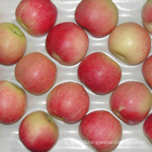 Professional Supplier of Fresh Red Gala Apple