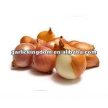 fresh red shallot size of 2-4cm with big supply quantity
