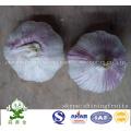 Red Skin Garlic (normal white garlic) New Crop 2016 From China