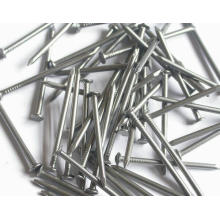 Professional Factory Produce Low Price Common Iron Nail