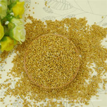 2016 New Crop Yellow Millet in Husk for rice wholesale