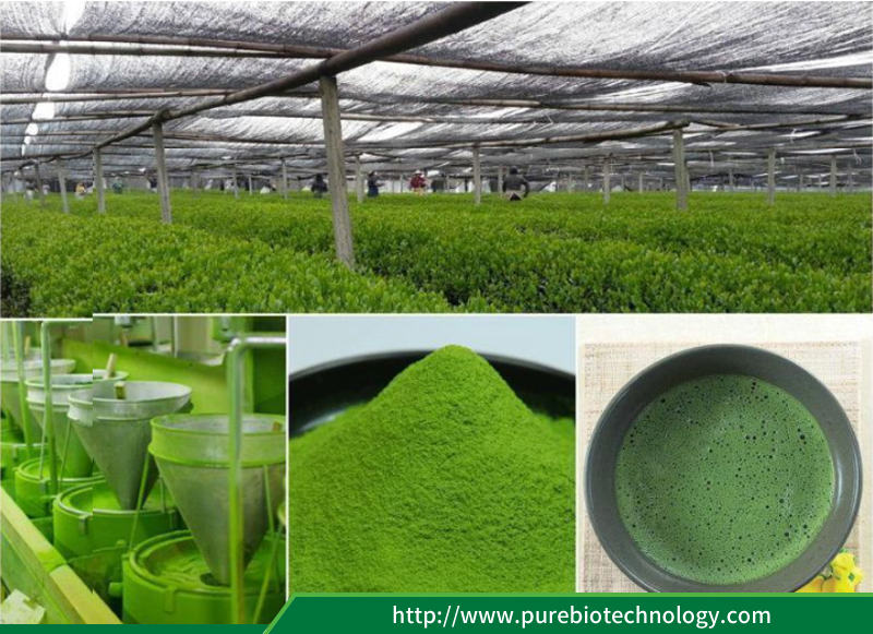 Specification of Matcha