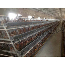 Hot Sale Galvanized Chicken Cage Certificate of ISO9001