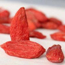 Bayas de jazmín de Medlar Bayas de goji húngaras de Wolfberry chino