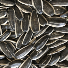 High quality chinese sunflower seeds for edible