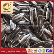Caramel Flavor Roasted Sunflower Seeds for Sale Bulk Price