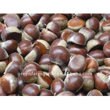 Keenest Price Fresh Chestnuts