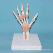 Menschliches Handgelenk Medizinisches Anatomisches Modell mit Ligament (R020915)