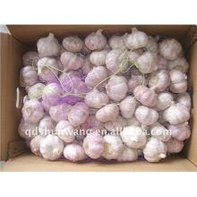 Chinese garlic 6.0cm 10kg carton