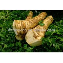 frisches Meerrettichwurzelkraut zum Verkauf mit ISO-Zertifikat