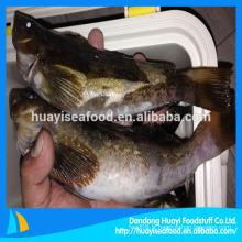 Fournisseur de poisson écrémé