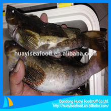 whole fat greenling fish supplier