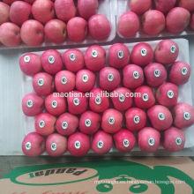 Shandong Fresh Red Fuji Apple2017 nueva temporada