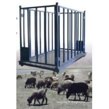 Échelle de pesée des animaux pour les moutons
