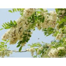 Extracto de Plantas Extracto de Sophora Japonica 95% Quercetin