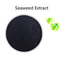 Купить онлайн сырье Порошок экстракта морских водорослей