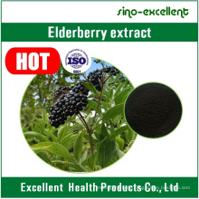 Natural Extract Elderberry Extract Powder