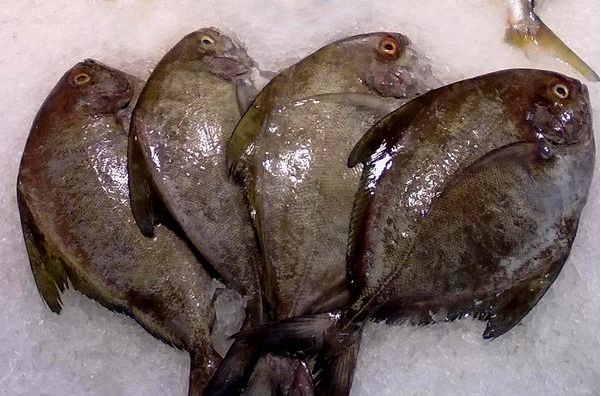Black Pomfret in Good Quality