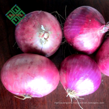 Chinese hot sale real fresh onion