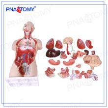 PNT-0300 vida tamanho 85cm dual-sex open back torso humano modelo