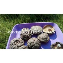 Quality Mushroom Fresh Smooth Shiitake Mushroom for Sale