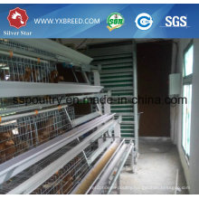Silver Star a Type of Automatic Chicken Cage