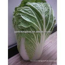 sell new crop Chinese Cabbage brother kingdom