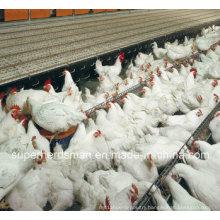 Autoamtic Poultry Farm Equipment for Breeder Chicken