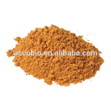 Ingredientes naturales Polvo de extracto de ginseng rojo, salud general