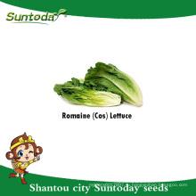 Suntoday Азиатский салат овощной использования зеленых листьев садовых растений F1 органические салат Ромэн семена всхожесть сеялки(32001-1)