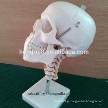 Modelo de crânio de PVC durável ISO com modelo de espinha cervical, crânio humano