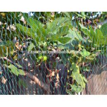 Plastic Green Climbing Plant Support Netting para la venta