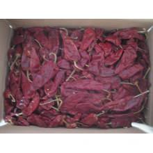 Neue Ernte Gute Qualität Export Fresh Yidu Chili