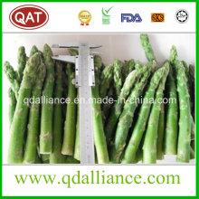IQF Frozen Spring Green Asparagus