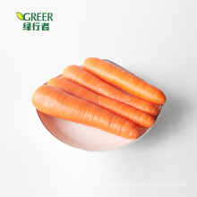 Fresh Carrot with S M L grade export to HK Malaysia  Singapore East South Asia