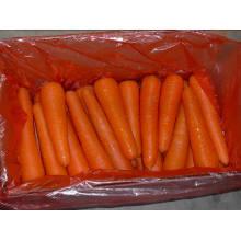 Loosing Packing/New Fresh Carrot