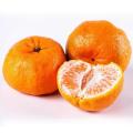 Hot Selling Sweet Seedless Fresh Juicy Mandarin Orange