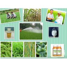 Activador de Crecimiento de Plantas Anti-brotación para Patatas 50% Ec (CIPC) Clorprofam